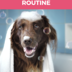 Have a regular dog grooming routine