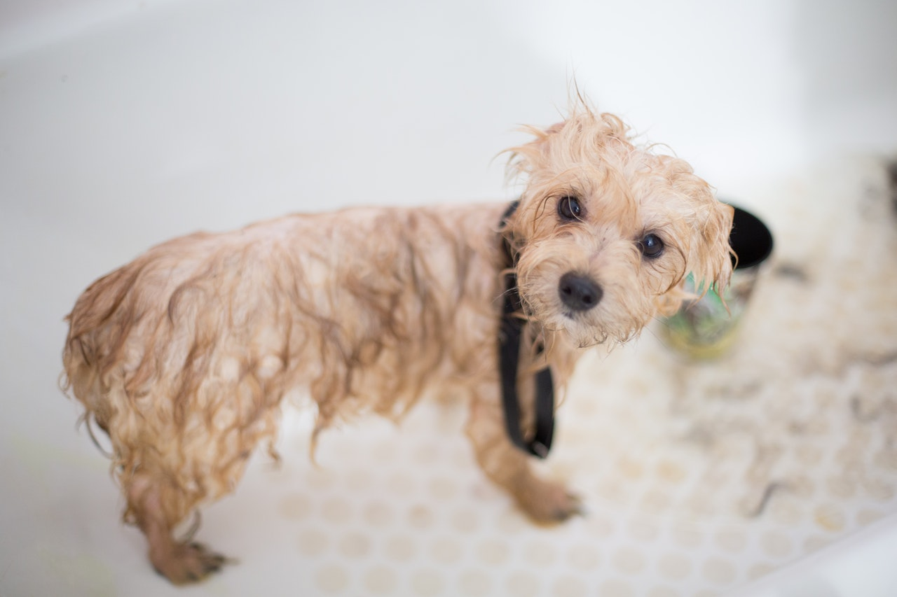 A dog getting a bath as part of its dog grooming routine